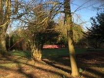 De winter parkland met leafless bomen stock afbeelding