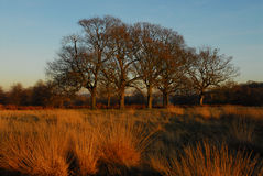 De winter in Richmond park Royalty-vrije Stock Foto