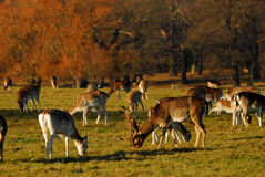 De winter in Richmond park Stock Foto