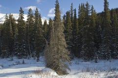 De winter in Rockies Royalty-vrije Stock Afbeelding