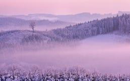 De winter roze landschap Stock Afbeeldingen