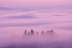 De winter roze landschap Stock Foto's
