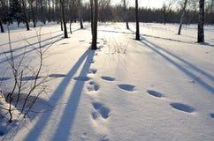 De winter Siberisch bos, het gebied van Omsk Stock Foto