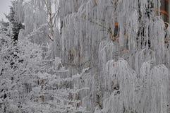 De winter sierboom die met natuurlijke vorst wordt behandeld stock fotografie