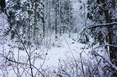 De winter sneeuw houten landschap Stock Fotografie