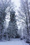 De winter sneeuw houten landschap Royalty-vrije Stock Fotografie
