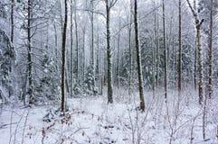 De winter sneeuw houten landschap Royalty-vrije Stock Afbeeldingen