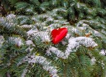 De winter, sneeuw op de takken van een naaldboom royalty-vrije stock fotografie