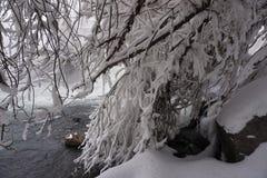 De winter, sneeuw, rivier, bomen stock fotografie