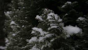 De winter, sneeuw, spar Dalende Sneeuwvlokken stock video
