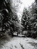 De winter in sneeuwbos 1 Stock Foto's