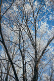 De winter sneeuwbos Stock Afbeeldingen