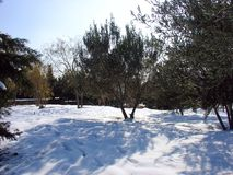 De winter in stad Stock Fotografie