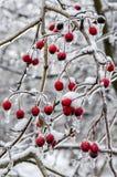 De winter. Suikerglazuur. royalty-vrije stock fotografie