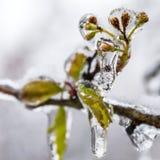 De winter. Suikerglazuur. royalty-vrije stock afbeelding