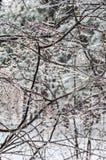 De winter. Suikerglazuur. royalty-vrije stock afbeeldingen