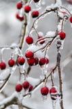 De winter. Suikerglazuur. Stock Afbeelding