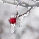 De winter. Suikerglazuur. Stock Foto
