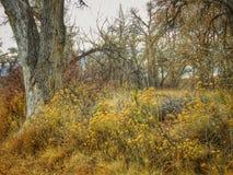 De winter Toneelcottonwood Forest Southern Colorado Stock Foto