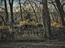 De winter Toneelcottonwood Forest Southern Colorado Stock Fotografie