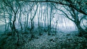 De winter toneellandschap van koel bos stock foto's