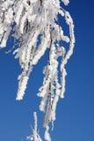 De winter van de berk Royalty-vrije Stock Afbeelding