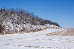 De Winter van de Rij van de boom Stock Afbeelding