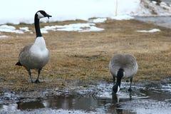 De Winter van Edmonton Royalty-vrije Stock Afbeelding