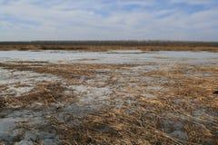 De winter van het moerasland Stock Afbeeldingen