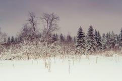 De winter van landschap Royalty-vrije Stock Afbeeldingen