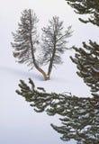 De Winter van Yellowstone Toneel Royalty-vrije Stock Afbeelding