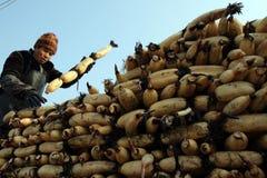 In de winter verdienen de arbeiders hun hard geld in de vijver Royalty-vrije Stock Foto's