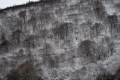 De winter in volledige kleur royalty-vrije stock foto's