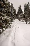 De winter wandelingssleep met sneeuwschoenen rond stappen en bomen Stock Foto