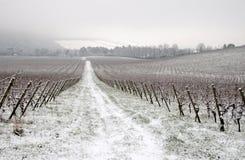 De winter in wijngaard Stock Foto