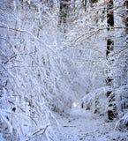 de winter witte het meest forrest Stock Fotografie
