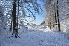 de winter witte het meest forrest Royalty-vrije Stock Foto