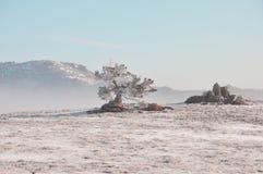 De winter in Wyoming Stock Fotografie