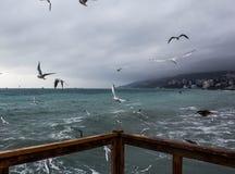 De winter in Yalta royalty-vrije stock afbeelding
