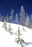 De winter in Yellowstone Stock Foto's