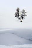 De winter in Yellowstone Stock Afbeelding