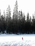 De winter in Yosemite Stock Afbeelding