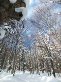 De winter zonnige dag in bos royalty-vrije stock foto's