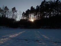 De winter zonnige ladscape Stock Foto