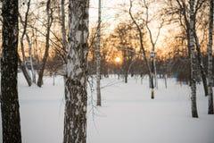 De winter Zonsondergang sneeuw berken Stock Afbeelding