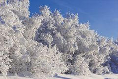 De winter in Zweeds Lapland Stock Afbeelding