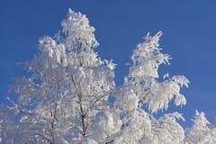 De winter in Zweeds Lapland Stock Afbeeldingen