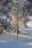 De winter in Zweeds Lapland Stock Fotografie