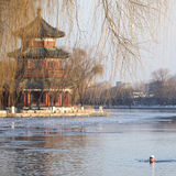 De winter zwemt in Peking Stock Afbeeldingen
