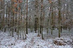 De winteraanraking bij de rand van het bos royalty-vrije stock afbeelding